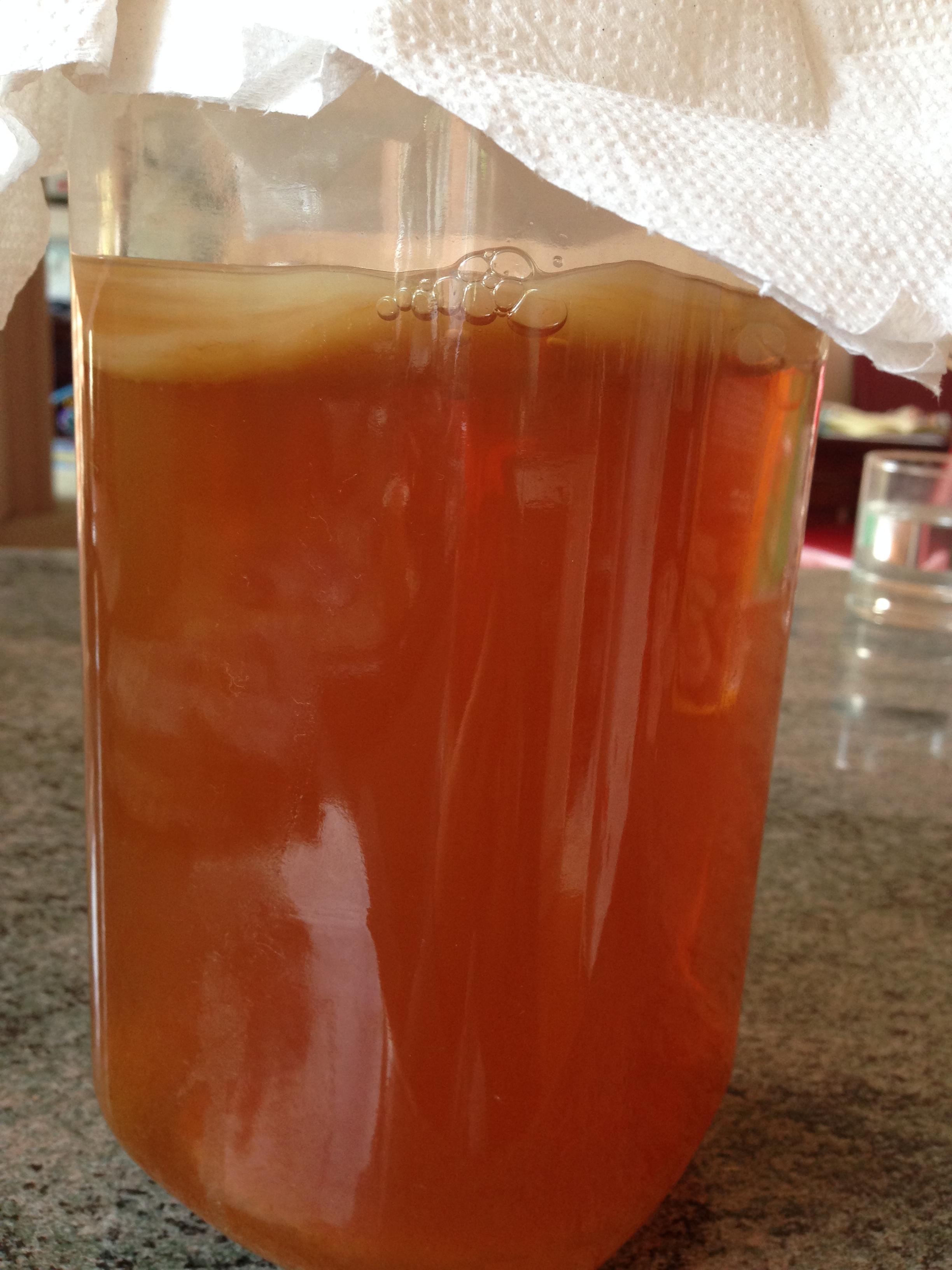 Kombucha Tea Brew