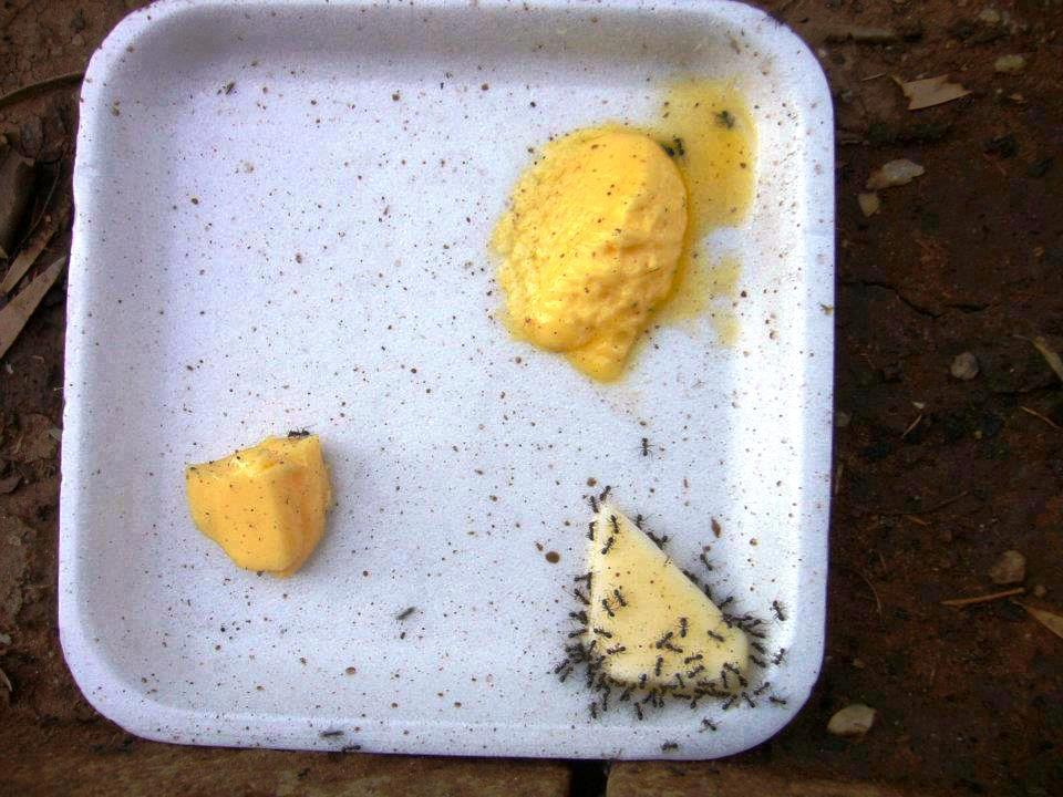 margarine v butter